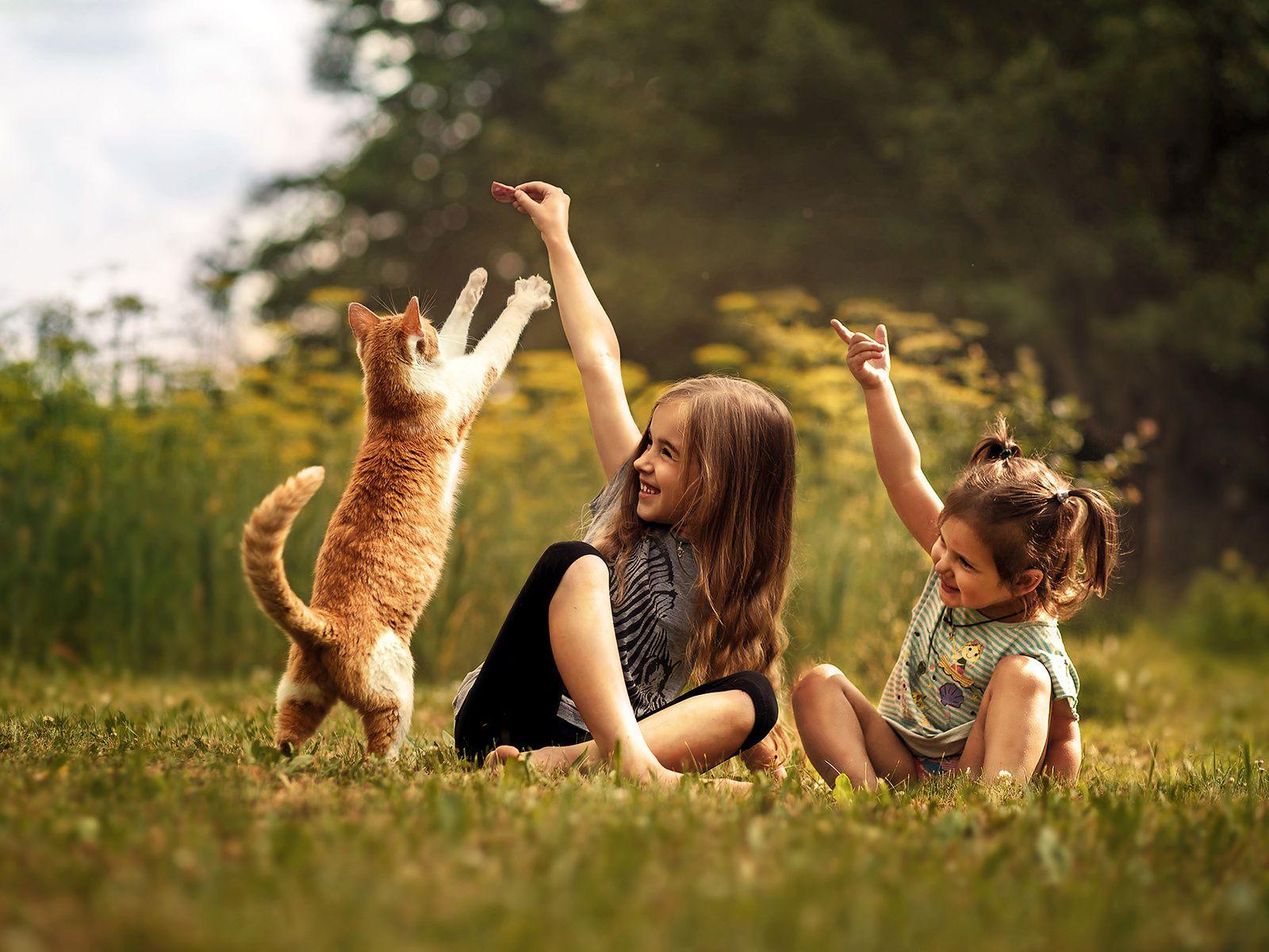 enfermedad-por-arañazo-de-gato