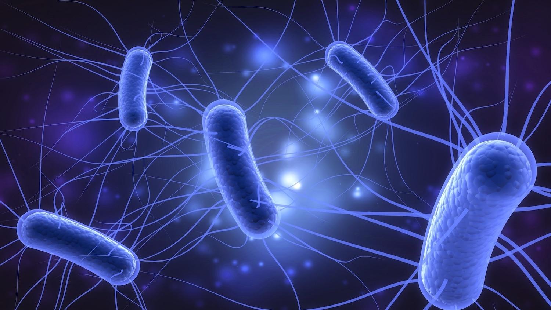 gastroenteritis bacteriana