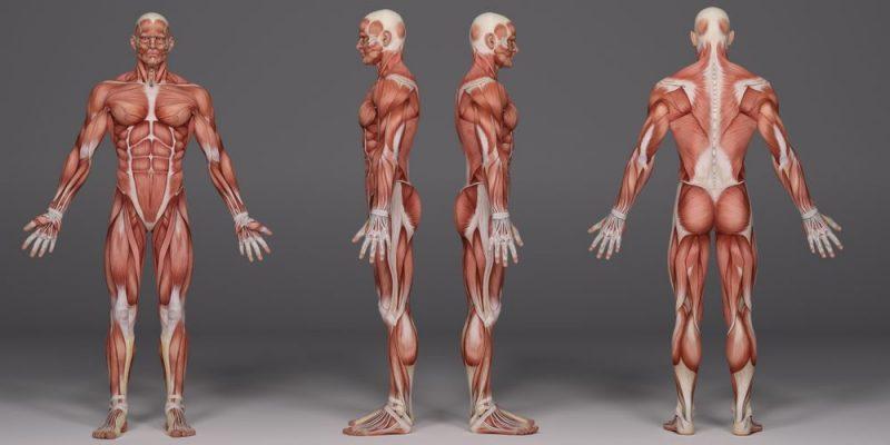Enfermedades-del-Sistema-Muscular-1