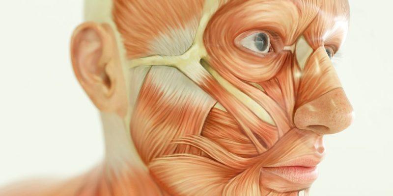 Enfermedades-del-Sistema-Muscular-6